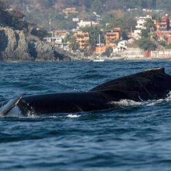 Whale Watching in Ixtapa Zihuatanejo