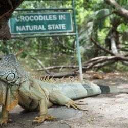 Actividades Iguanacocodrilario