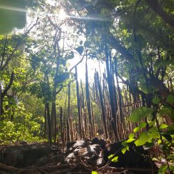 Hiking in Ixtapa Zihuatanejo