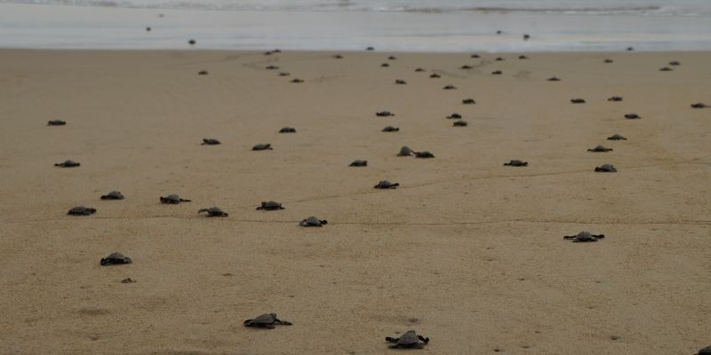 Tortugas Playablanca