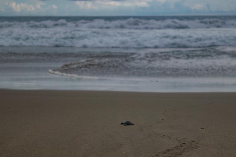 Covers Playa Blanca Beach Zihuatanejo